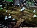 grzybki dzungla