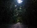 way_to_calakmul_reserva