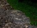 iguana_ekbalam
