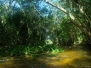 Silvituc - Palenque