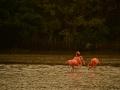 flamingos_de_flavien